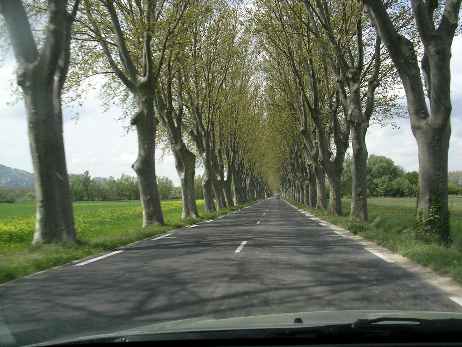 Árbores ó carón da estrada