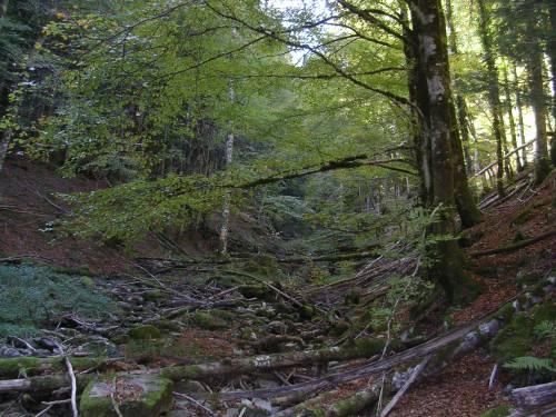 Río de montaña. Irati