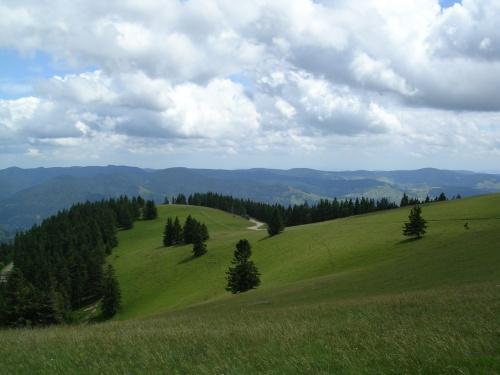 Preto co cumio de Belchen. Selva Negra (Alemaña)