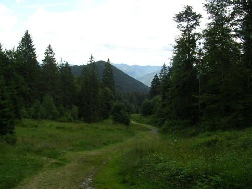 Sendeiro de ascensión ó cumio de Belchen. Selva Negra (Alemaña)