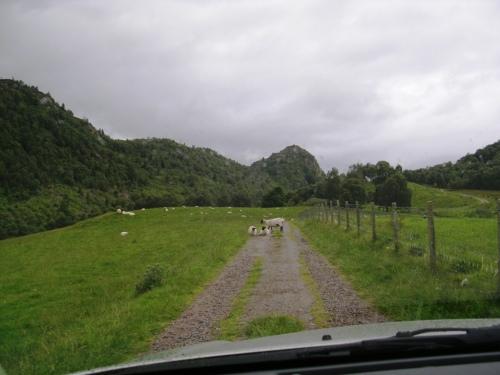 O GPS non sempre te leva polo camiño correcto… aínda que isto é unha autopista comparado co que me atoparía despois