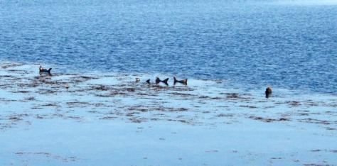 Focas en las Islas de Aran