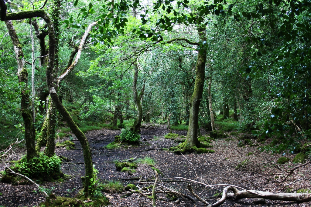 Bosque dentro do Parque Nacional de Killarney