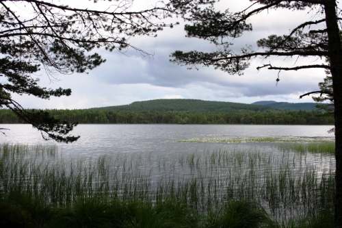 Loch Garten en el Cairngorms National Park