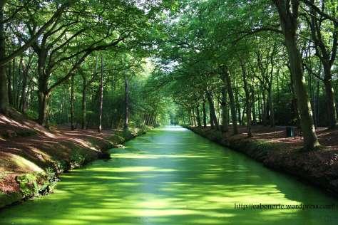 Bosque e canal en Bergen. Holanda