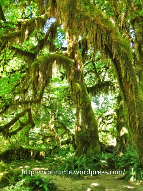 Bosque templado na Selva de Hoh