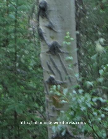 Pegada de oso nunha árbore